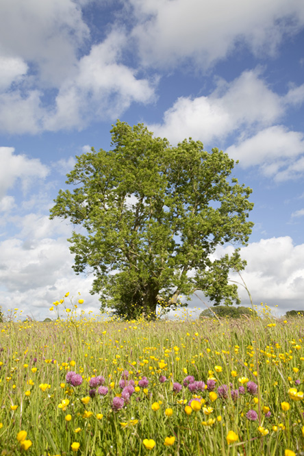 Ash Tree. Photo: Edward Parker