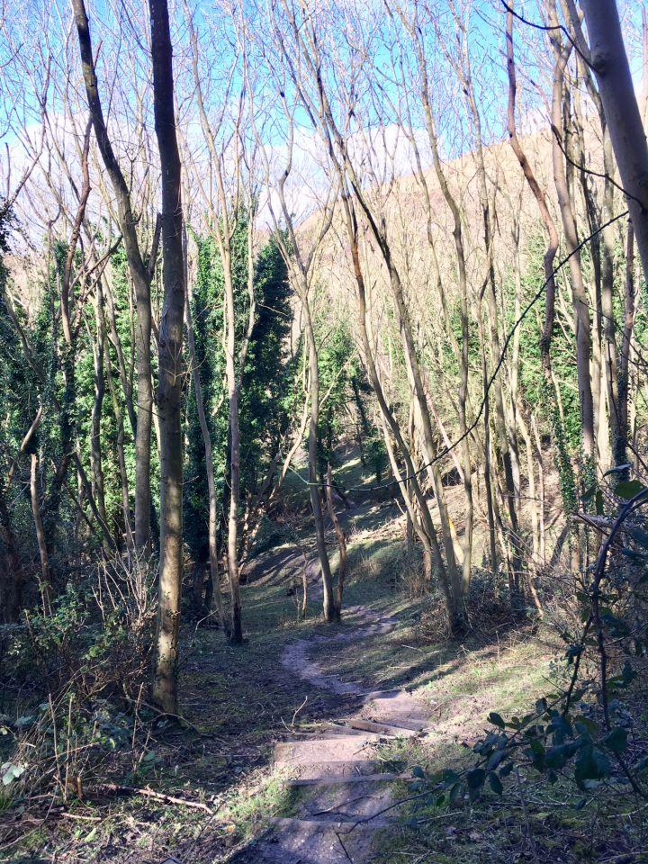 Ash trees, Folkestone Downs