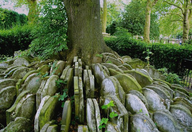 The Hardy Ash in Old St Pancras Churchyard. Photo: Paul Hudson - https://flic.kr/p/cn1uSf