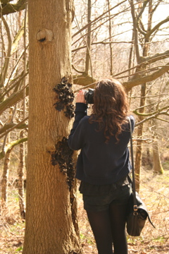 Ash tree photography. Photo: Outdoor Studios