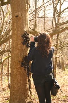Ash tree photography. Photo: Outdoor Studios