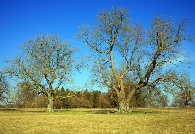 Tree in field. Photo: Kent Downs