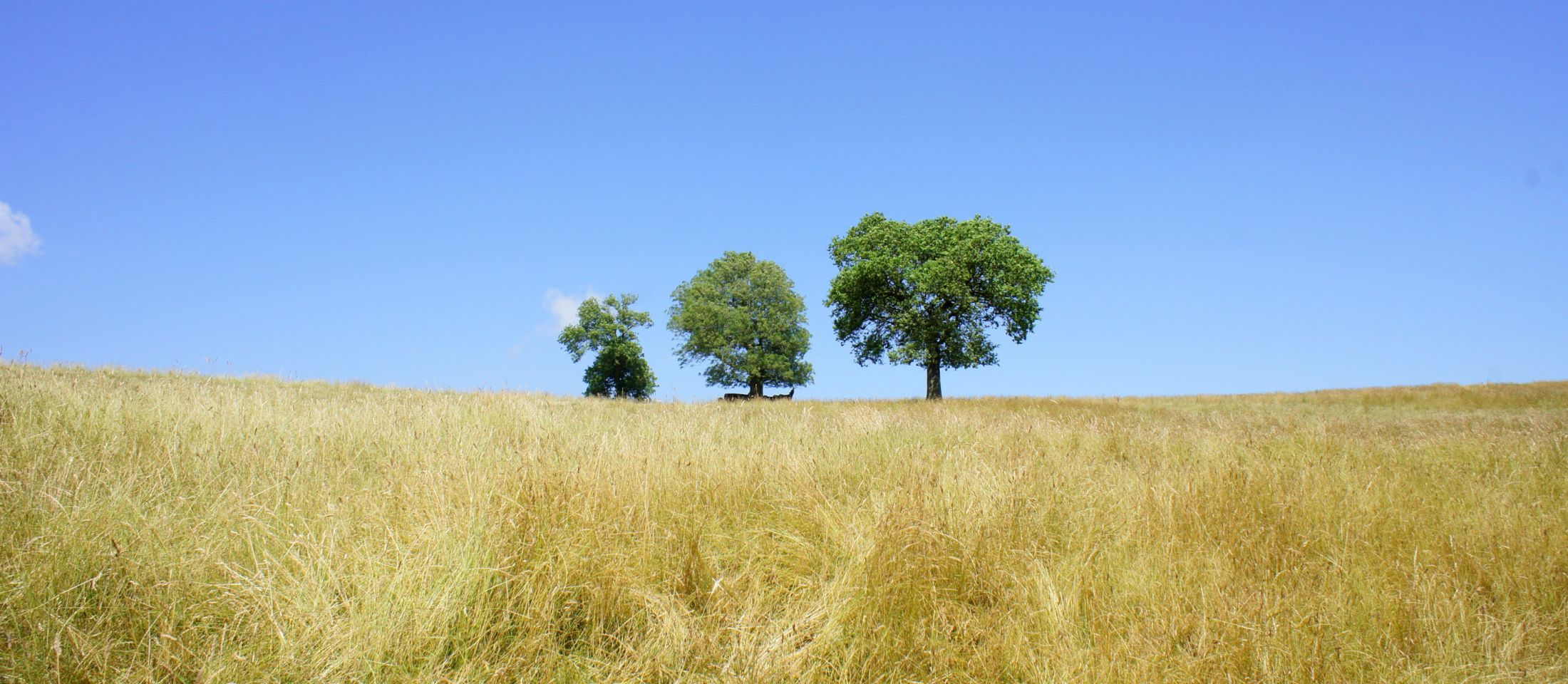 Ash, Ash, Oak in Brabourne, Kent Downs, July 2013. Photo: The Ash Project, Kent DownsKent Downs AONB