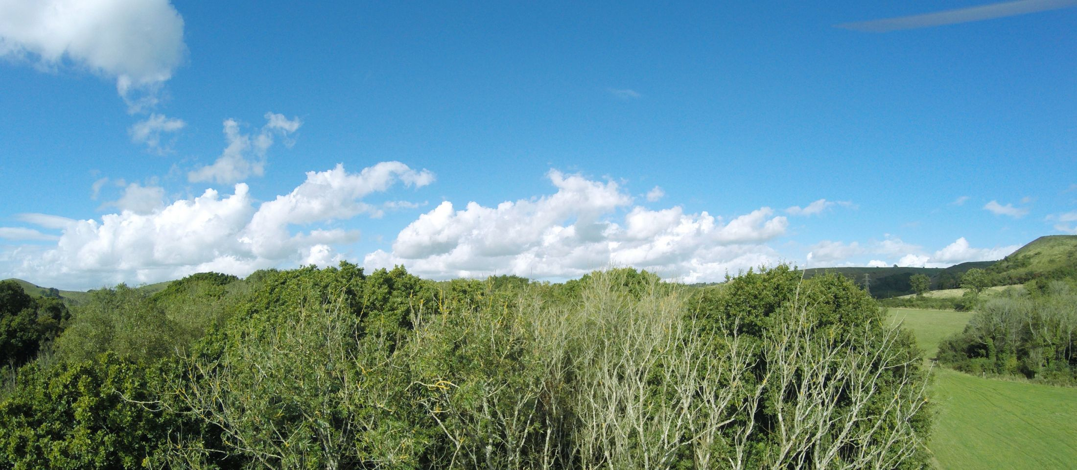 The effects of ash dieback in the Kent Downs. Photo: Kent Downs AONB, 30 Sept 2016.