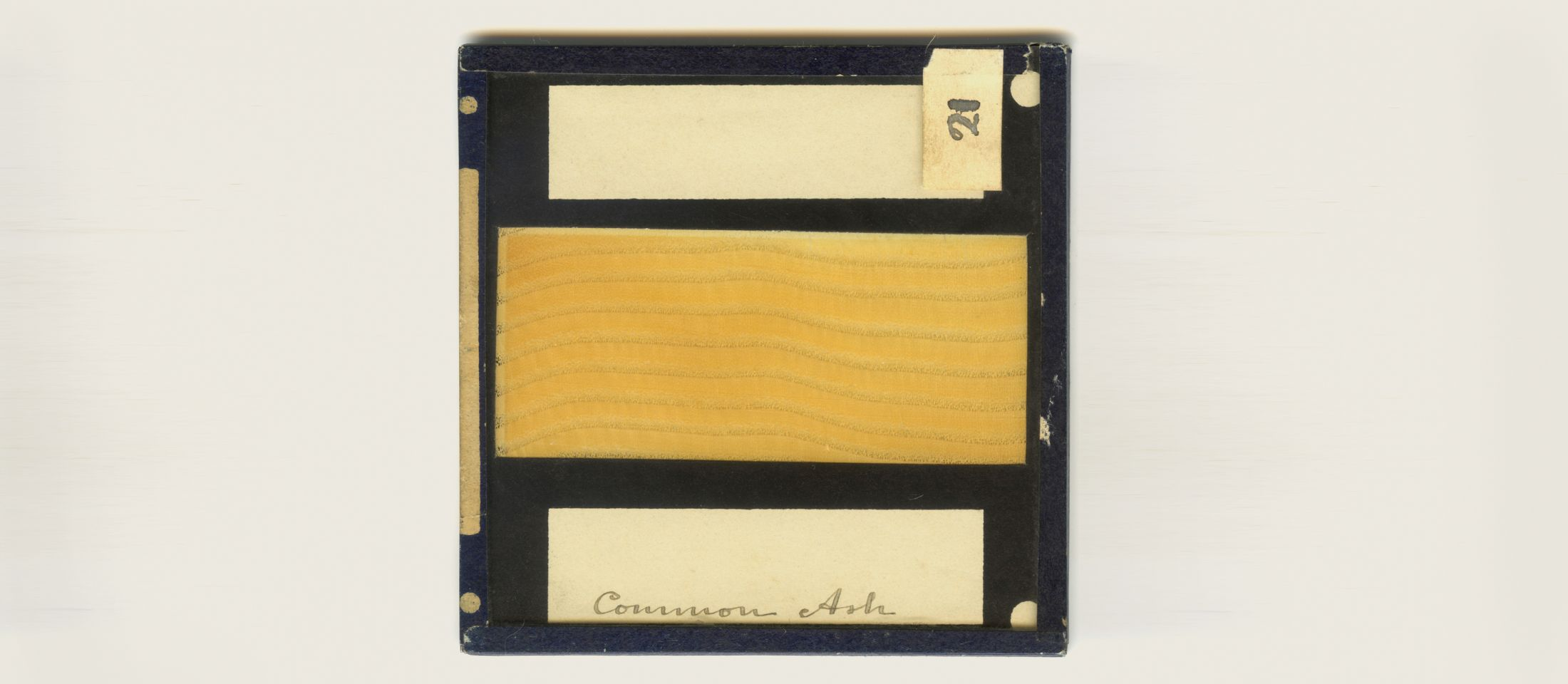 """Common Ash"" slide, found during R&D. Photo: Ackroyd and Harvey"