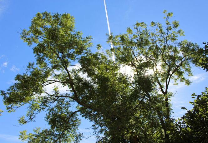 Ash and vapor trails. Photo: James Collie