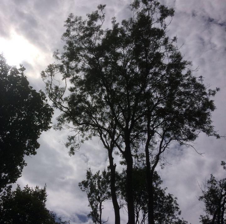 Canopy. Photo: Diane Comley