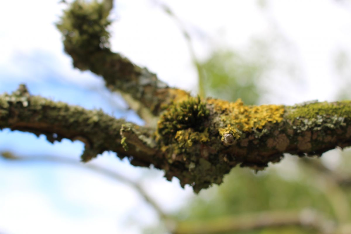 Lichen Branch. Photo: James Collie
