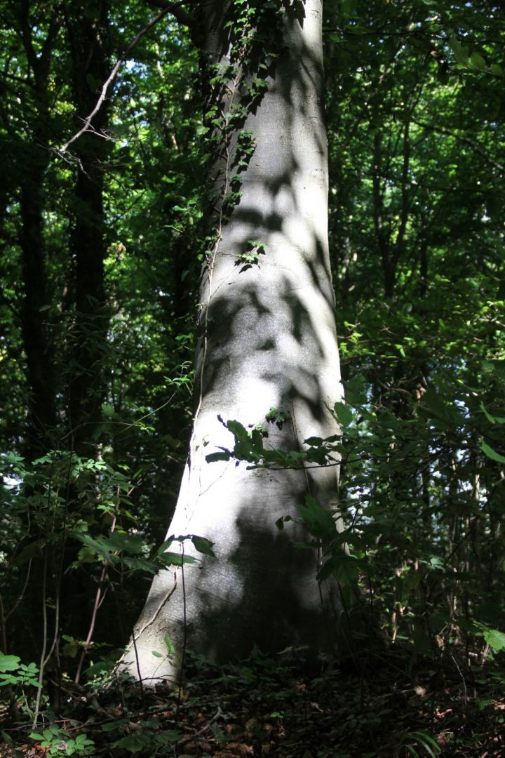 Tree Trunk. Photo: Will Glanfield