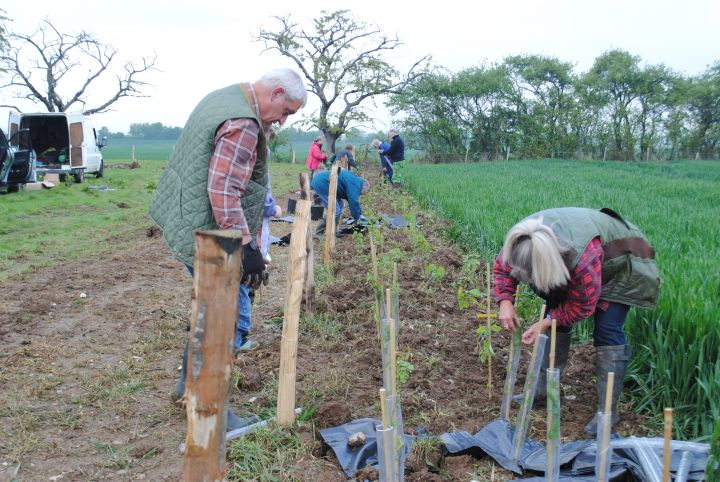 Tree planting. Photo: Kent Downs