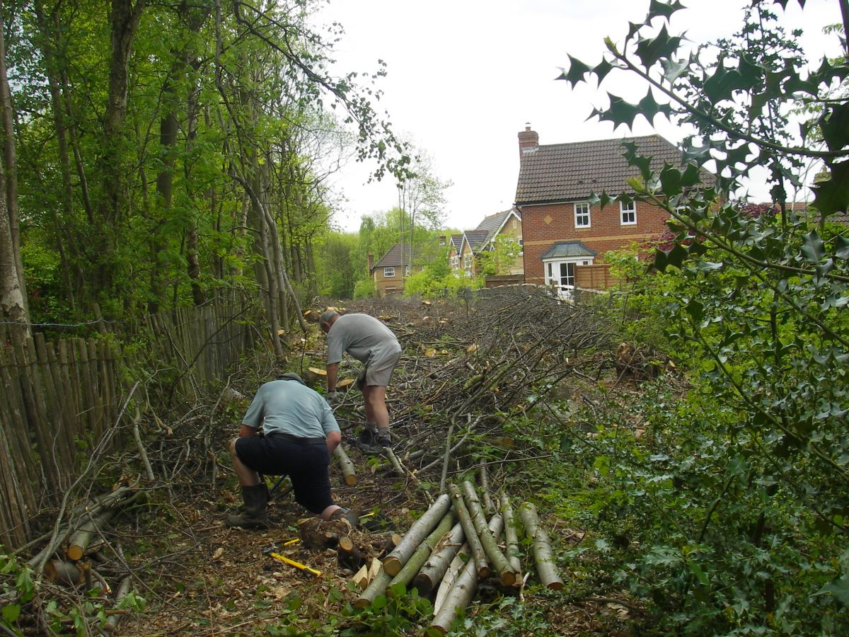 Coppicing. Photo: Medway Valley, CMP