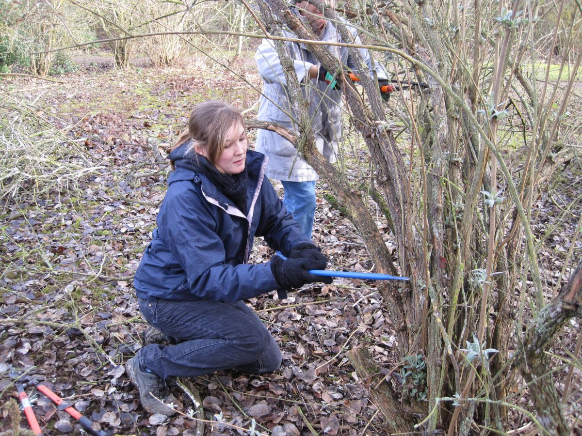 Louise_sawing. Photo: Medway Valley