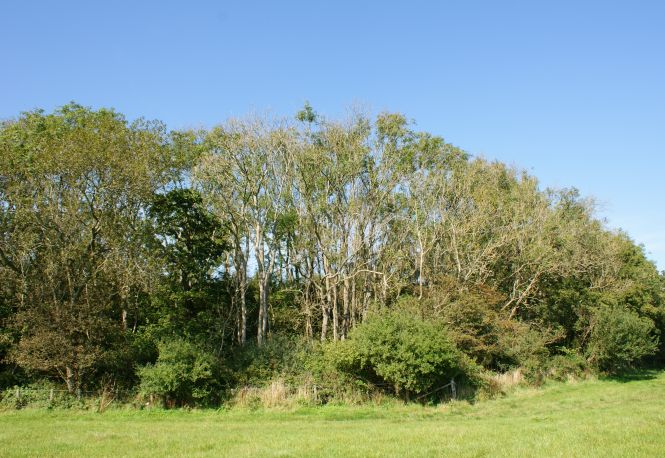 Asholt Wood, Kent, 2014. Photo: Kent Downs
