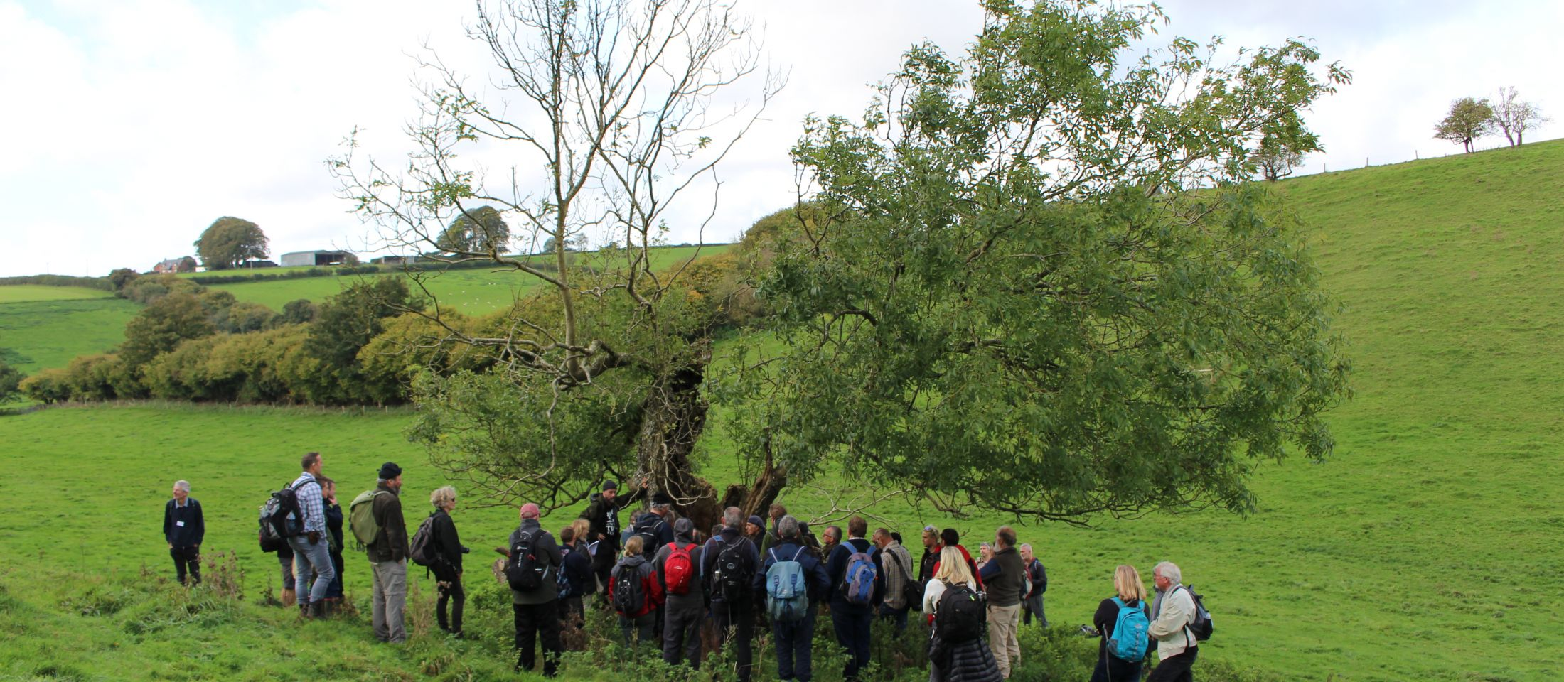 Veteran ash tree surrounded by Ancient Tree Forum, Dorset 2017. Photo: Kent Downs