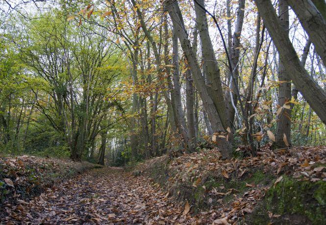 Farningham Woods. Photo: Explore Kent
