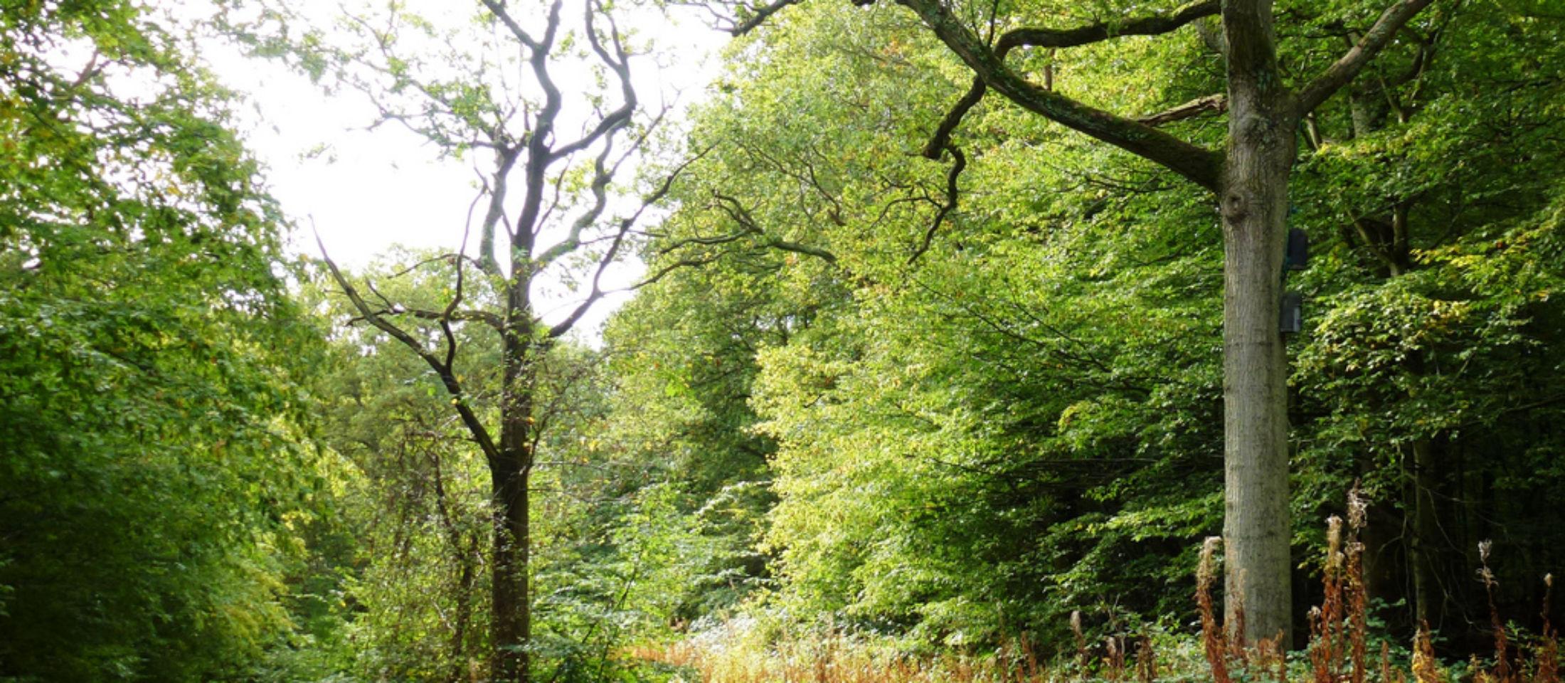 Ham Street Woods. Photo: Explore Kent