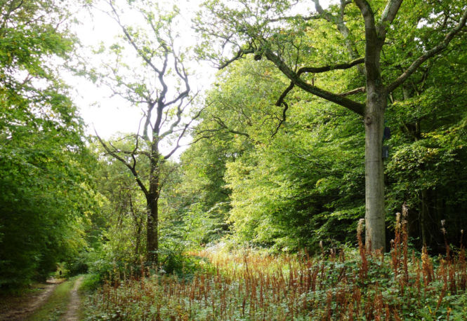 Ham Street Woods. Photo: Explore Kent