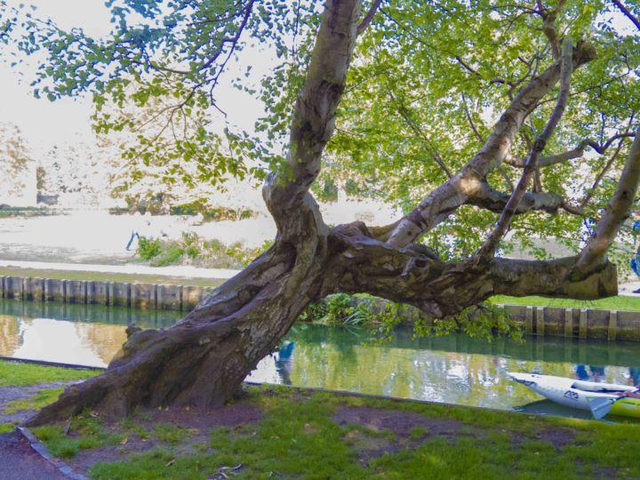 Old Birch Westgate Gardens Photo: David Carey
