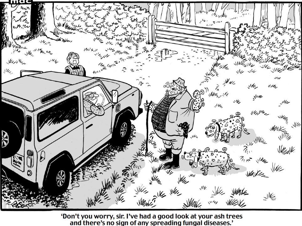 Cartoon Ash Dieback 2012. Photo: Tony Harwood