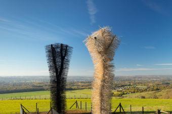 Ash to Ash, White Horse Wood. Photo: John Miller