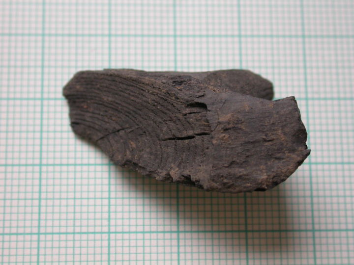 Fraxinus worked fragment - Historic England